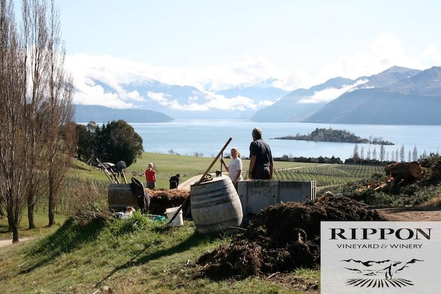 Most photographed vineyard in NZ (Wanaka) Pinot noir and sav recommended