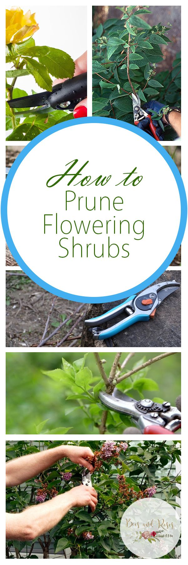 How to Prune Flowering Shrubs - Bees and Roses| Prune Shrubs, How to Prune Shrubs, Easily Prune Shrubs, Gardening, Gardening TIps and Tricks, Gardening Hacks, Flowering Shrub Care, Popular Pin #Shrubs #PruneShrubs