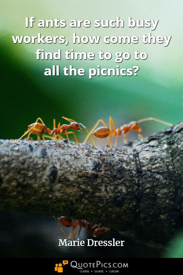 Happy Nationalpicnicday Who Decided This Holiday Falls On A Monday Instead Of Sunday If Ants Are Such Busy W Picnic Quotes Worlds Best Quotes Humor