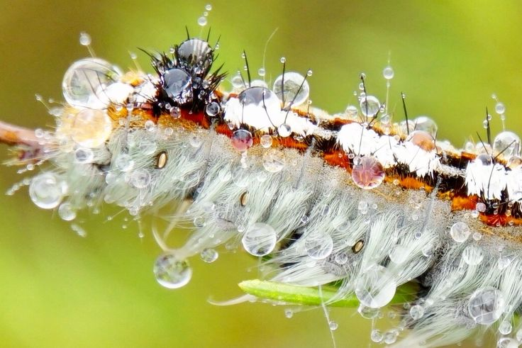 The Acrux Expedition » Africa with fresh eyes. Beautiful larvae covered in dew.