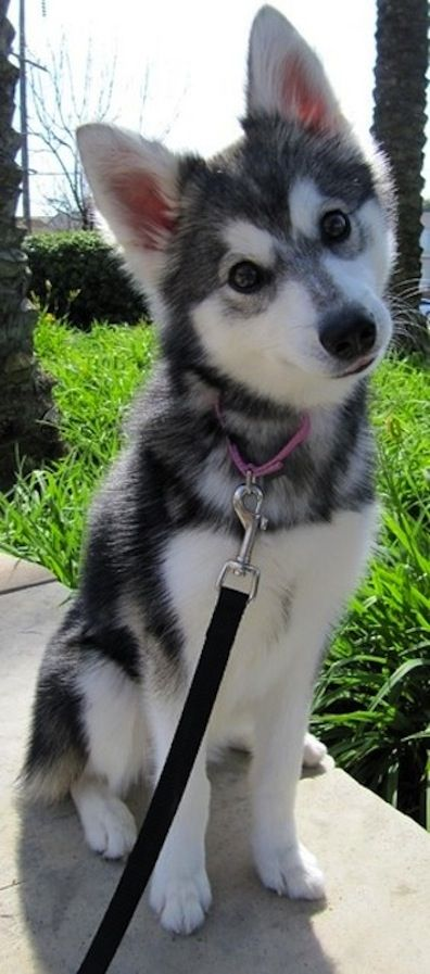 That head tilt thing that dogs do? Yah, kryptonite!   The 10 Most Adorable Puppies | Her Campus