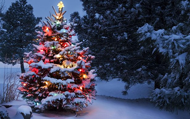 De belles fêtes de Noël pour tous et toutes !
