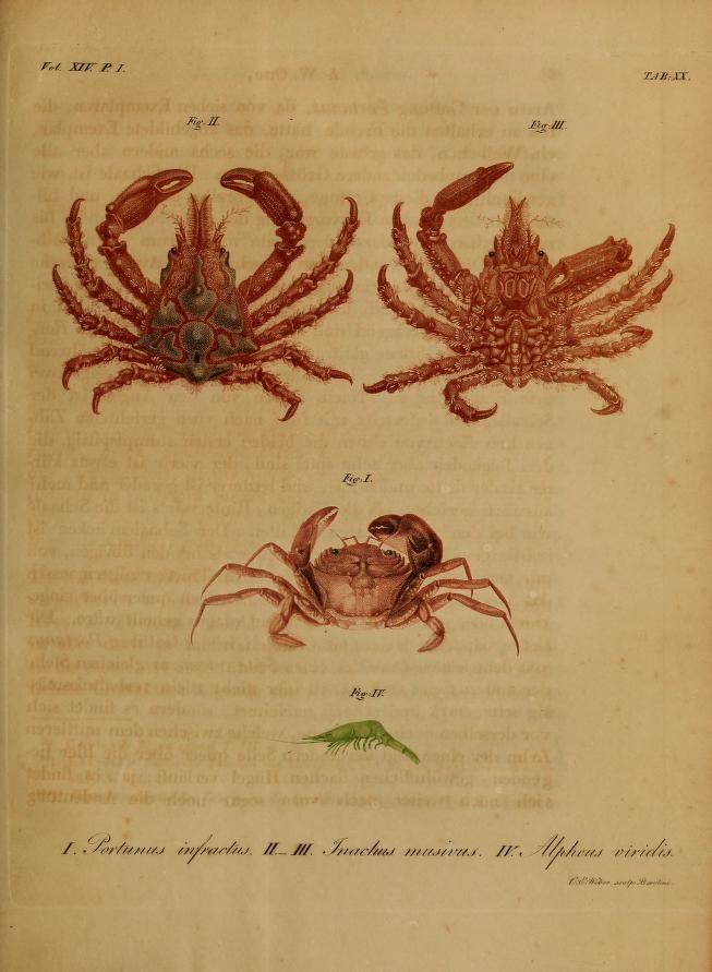 Nova Acta Physico-Medica, Academiae Caesareae Leopoldino-Carolinae Naturae Curiosum, Vol. 14, 1828-29.