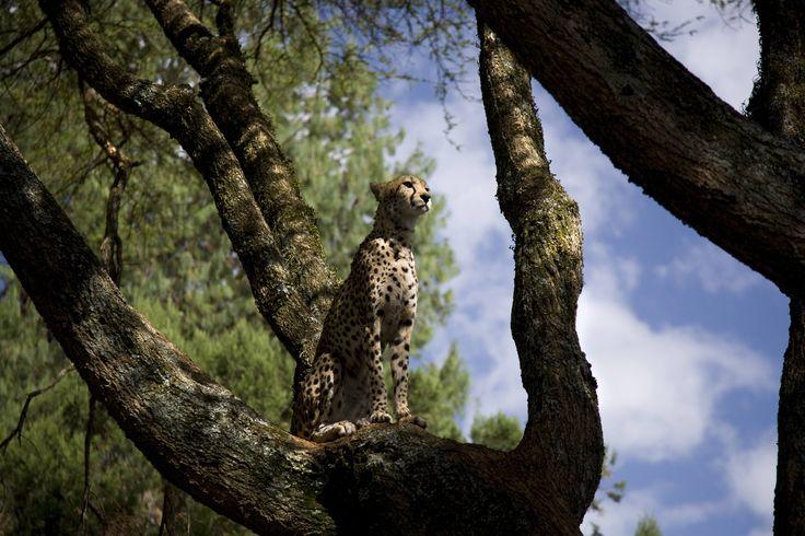 Kenya 2014 betty colombo