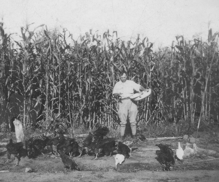 Kesilir mijn opa Hayo met zijn Amerikaanse kippen, mais uitstrooiend