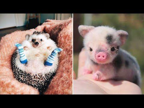 Süßeste Tiere! Niedliche Tierbabys Videos Zusammenstellung niedlicher Moment der Tiere …, #Tier …