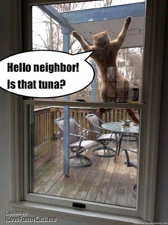 So Funny Cats! 20 pics. Best from Natali Astar