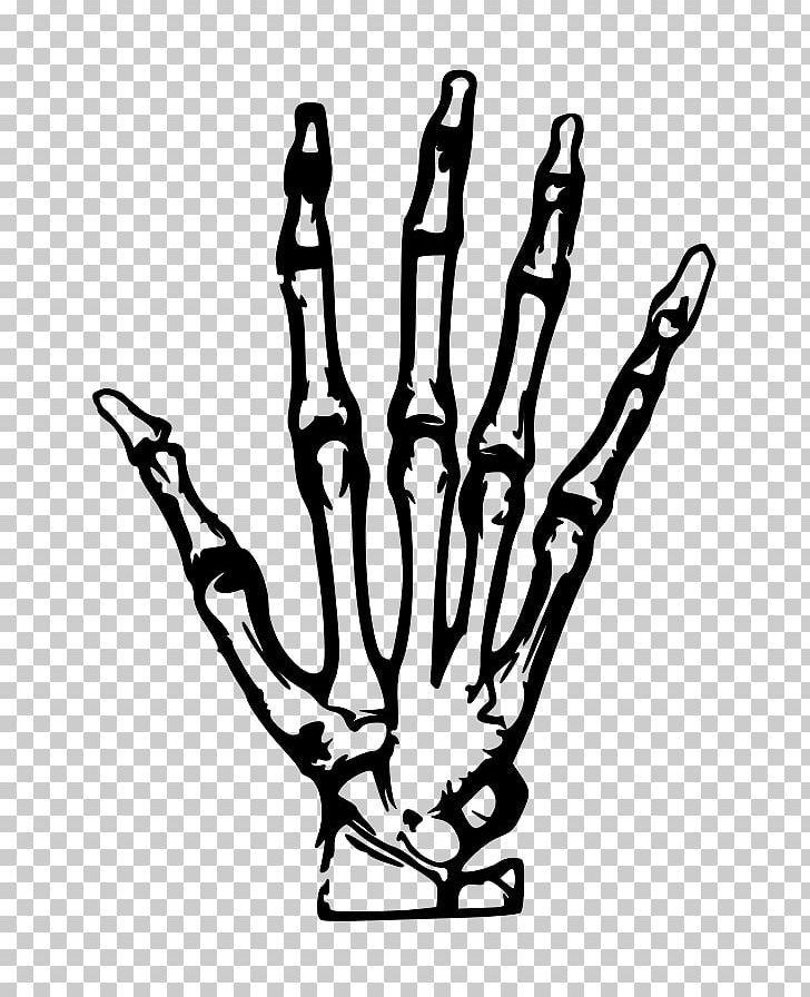 Human Skeleton Hand Png Anatomy Black And White Bone Carpal Bones Drawing Skeleton Hands Drawing Skeleton Hand Tattoo Easy Hand Drawings
