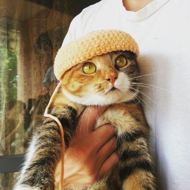 Micia con cappello...