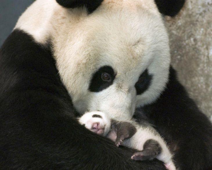 Μωρό πάντα, 15 μωρά ζώων που θα σας κάνουν να λιώσετε - (Page 2)