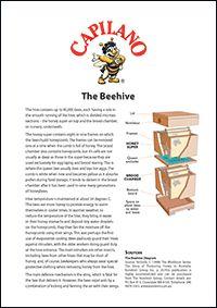 The Beehive #beekeeping #honey #facts