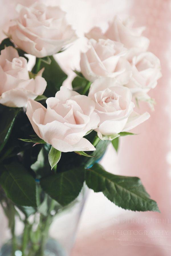 shanonquinnphotography.com Blush Pink Roses & Paillettes