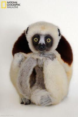 Imagenes Animales: Fotos de animales: monito con cara de asustado   [...