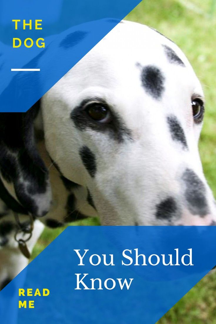 Dog Training Pointers To Help You In Your Dog Training Efforts