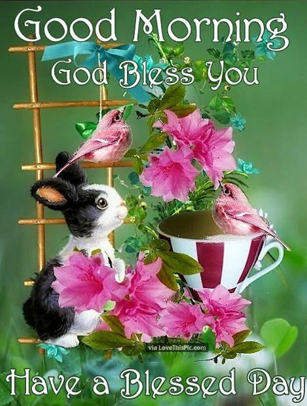 Good Morning God Bless You Have A Blessed Day Morning Good Morning