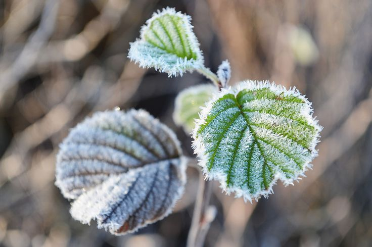 Spring frost: Met Office and RHS issue advice for gardeners to protect plants