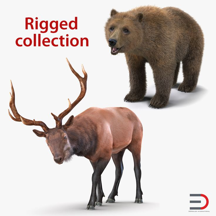 Bear and Elk Rigged Collection 3D model