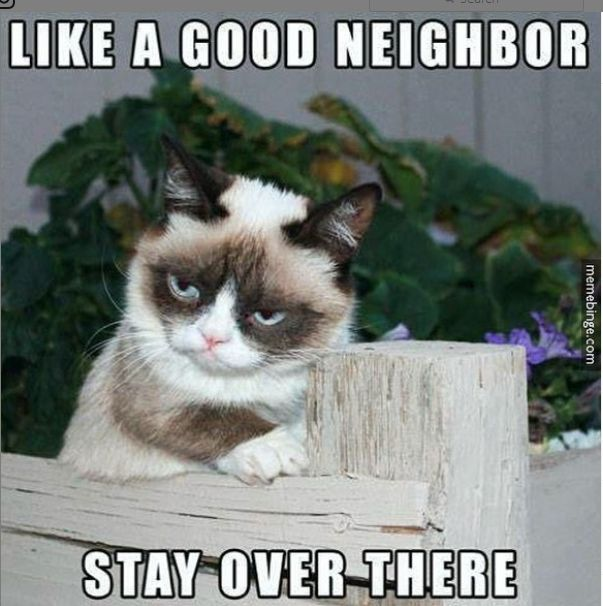 this is my soul animal!! anyone else ever feel like this kitty?