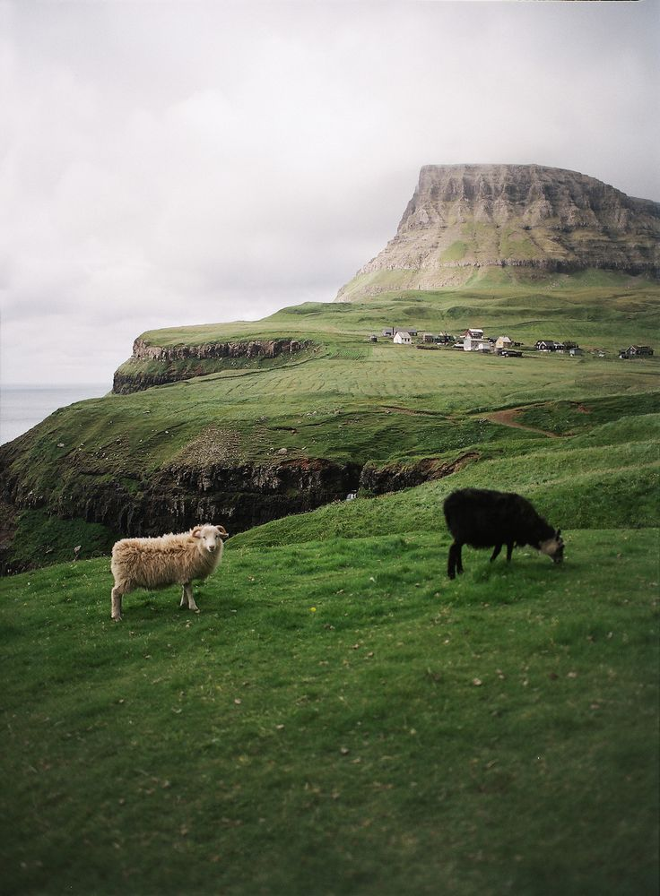 A Trip To The Faroe Islands