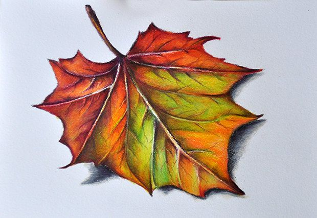coloured pencil leaves - Google Search