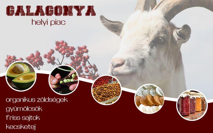 Galagonya helyi piac moodbar