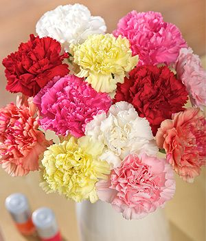 12 Classic Carnations - 12 stems of long-lasting single Carnations in mixed colours. Guaranteed to last two weeks.