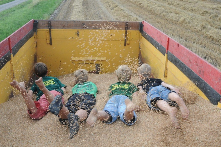 Spelen in het graan tijdens oogst tijd! Hooi Hooi!