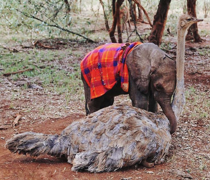Animal friendship at the David Sheldrick Wildlife Trust in Kenya