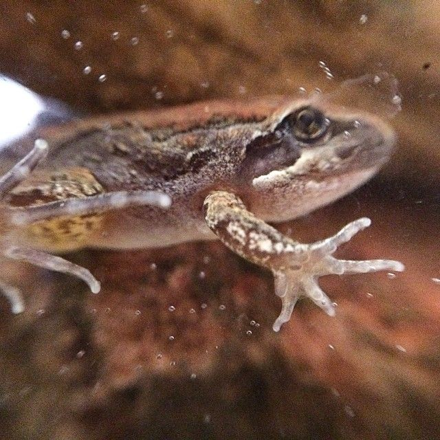 Set up a tadpole to frog tank – it's an amazing transformation to watch!