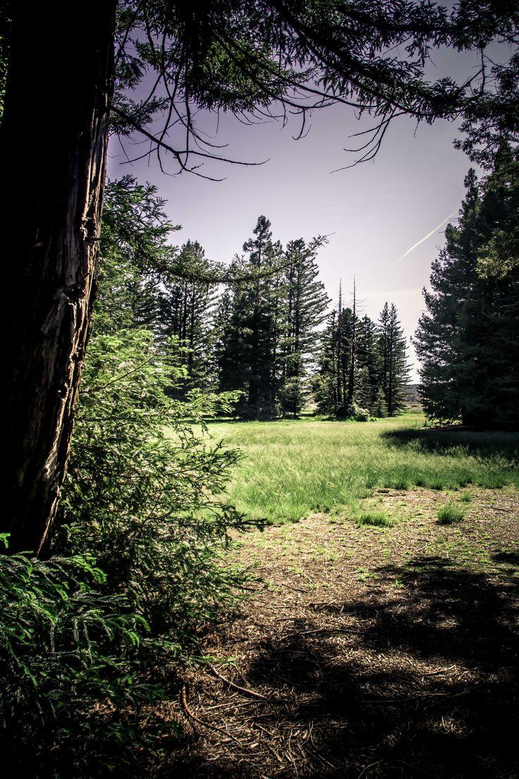 Walter Burley Griffin's Pialligo Redwood Forest