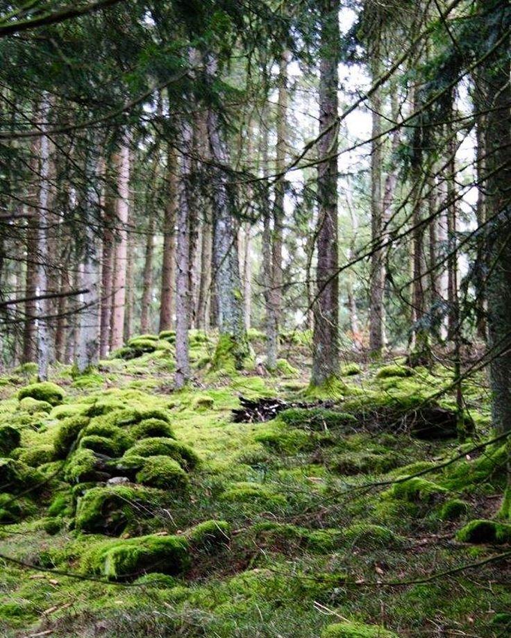 """Gefällt 87 Mal, 9 Kommentare - Capture the moment. (@edith.traeumeland) auf Instagram: """"Böhmerwald - Granite rocks covered with moss. . . . . #böhmerwald #mühlviertel #austria #woods…"""""""