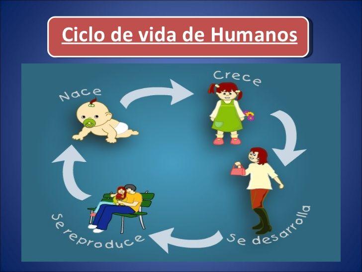 Resultado De Imagen Para Ciclo De Vida Del Ser Humano Para Ninos De Primaria Proyectos De Ciencia Para Ninos Ciclos De Vida Ciclo De Vida Del Software