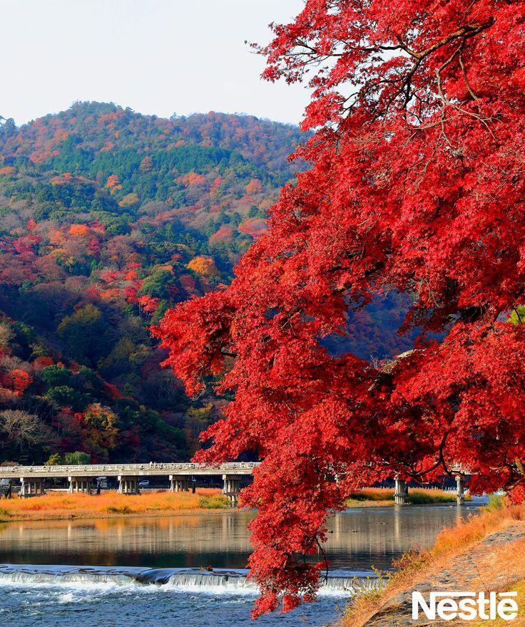 画像C:京都のすんだ空気と紅色が映えます。