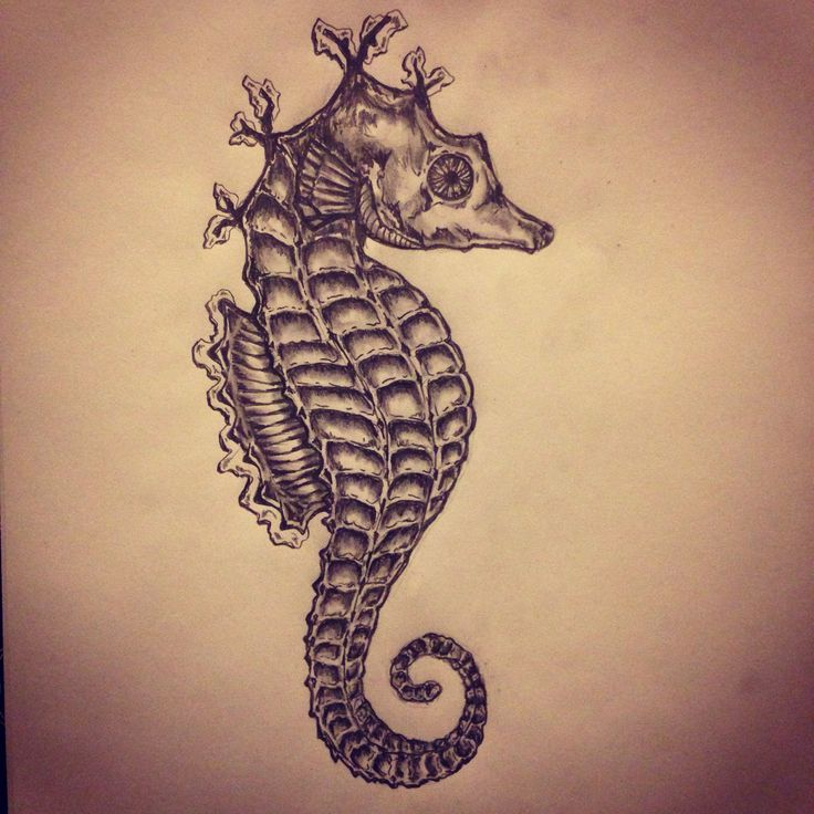 3 dimensional seahorse drawing google search coral for How to draw a simple seahorse