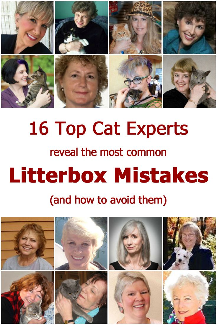 Litterbox problems and litterbox avoidance are common complaints in our cat behavior forum, so we...