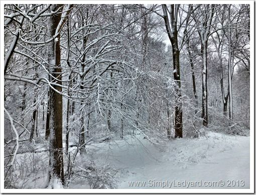 Another pretty snow photo taken in Ledyard, CT