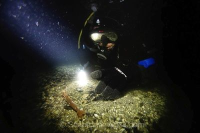 Close encounter of the night diving kind. Prawns are fun to check out on the silty sea floor.