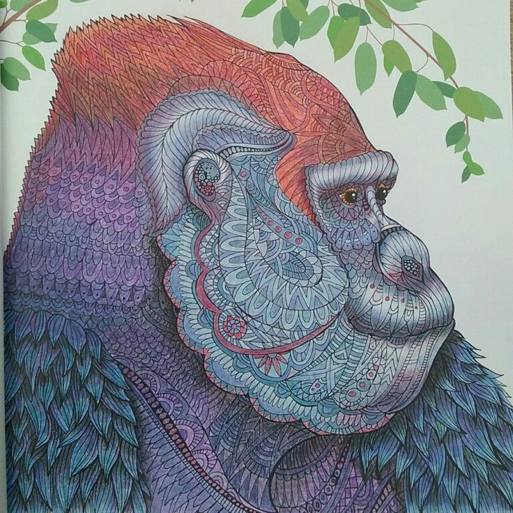 Eastern Gorilla From The Menagerie Colouring Book