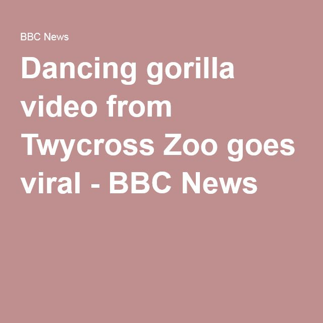Dancing gorilla video from Twycross Zoo goes viral - BBC News