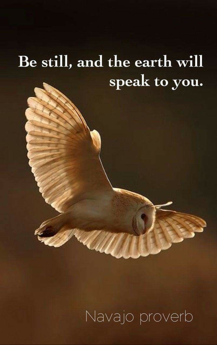 ...the earth will speak to you.