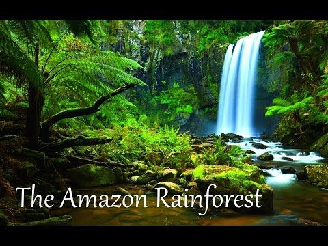 Amazon Rainforest Natural wonder - KHARAL TRAVELS