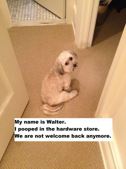 Incredibly Funny Ashamed Dogs:  Haha...