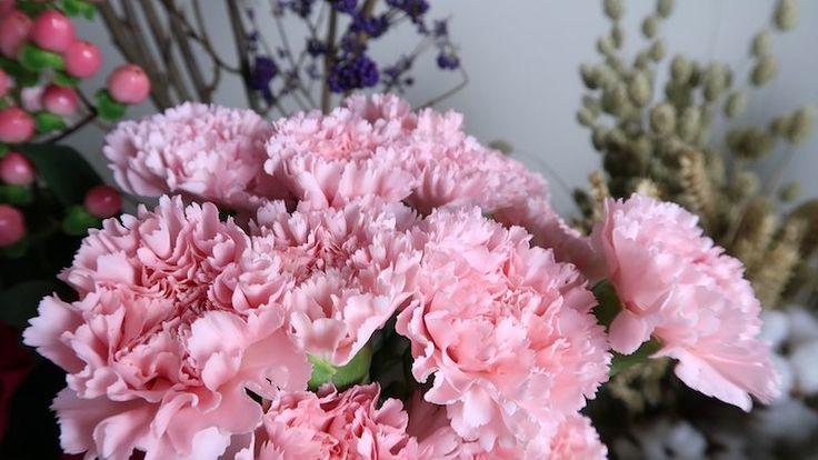 #Dianthus caryophyllus 'St.Jodiet'