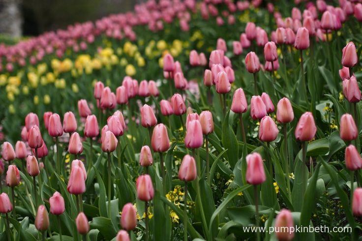 Guildford Castle Gardens in springtime.
