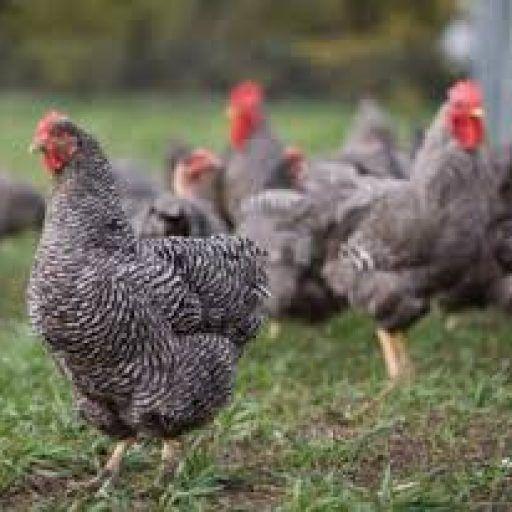 Vanzari/Anunțuri animale -agricultura Cauţi să-ţi vinzi animalul, sau pasărea din curte?, cauţi un animal sau pasăre? Cauţi să vinzi sau să cumperi ouă sau produse? nimic mai simplu, fă-ţi cont şi vinde, aici ai să găseşti cât de curând tot ceea ce doreşti din agricultură, este uşor şi simplu. Poţi posta anunţuri gratuite sau plătite tu alegi. Cum tu alegi ceea ce vrei să vinzi, de la pământ de flori la utilaje agricole. Iar ca început îţi urez BUN VENIT!