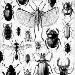 """Papier peint """"arrière-plan, insecte, retriver - insectes rétro"""" ✓ Un large choix de matériaux ✓ Impression écologique 100% ✓ Regardez des opinions de nos clients !"""
