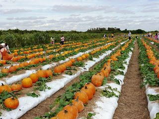 Bedner's Pumpkin Patch in Boynton Beach, FL