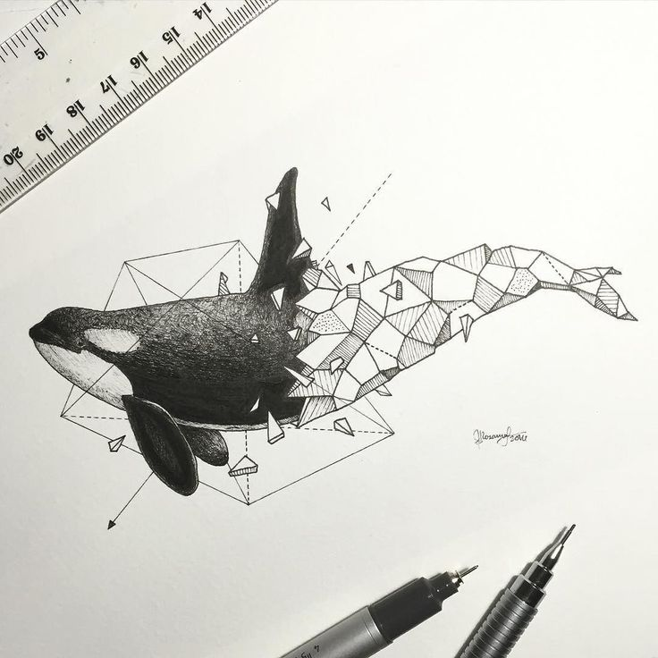 Geometric Beasts | Orca by kerbyrosanes