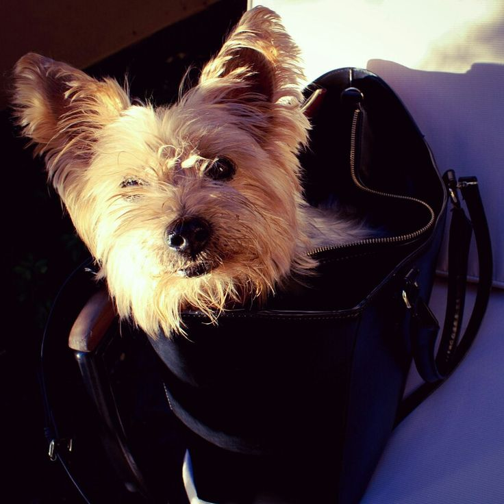 Female human bags are perfect.. for dogs also.