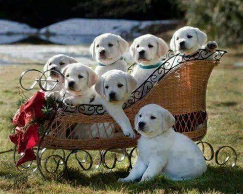 Sevimli köpek yavruları